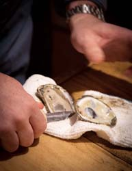 5 point shucked oysters george reis
